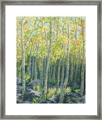 Into The Aspens Framed Print by Mary Benke