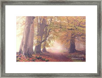 Into The Autumn Framed Print by Tim Gainey