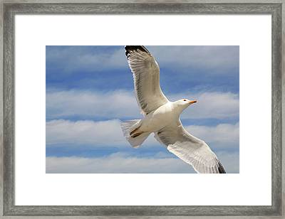 Into The Blue Framed Print by Donna Kennedy