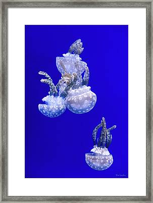 Into The Blue Framed Print by Wim Lanclus