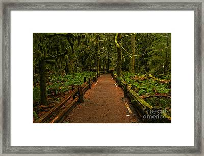 Into The Canadian Rainforest Framed Print by Adam Jewell
