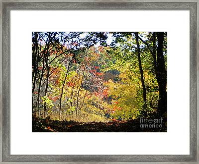 Into The Clearing Framed Print