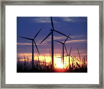 Into The Corn Framed Print by Jim Finch
