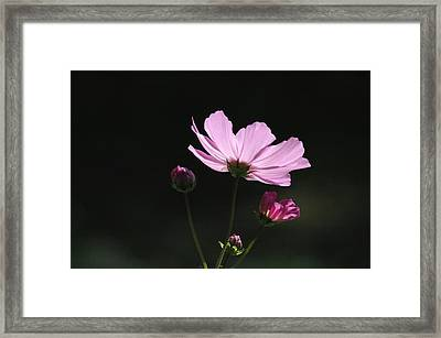Into The Cosmos Two Framed Print by Ross Powell