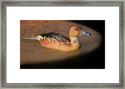 Framed Print featuring the photograph Into The Darkness  by Kim Henderson