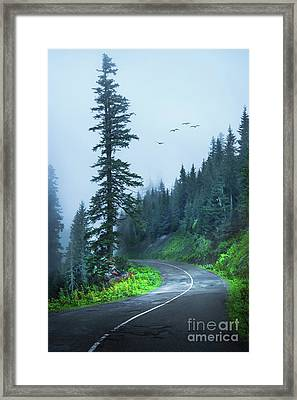 Into The Fog Framed Print by Svetlana Sewell