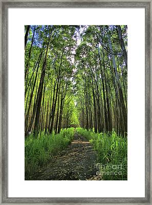 Framed Print featuring the photograph Into The Forest by DJ Florek
