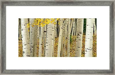 Framed Print featuring the photograph Into The Forest by Gary Lengyel