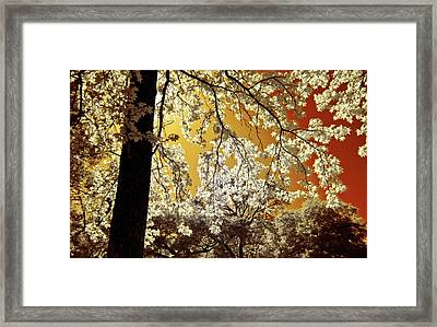 Framed Print featuring the photograph Into The Golden Sun by Linda Unger