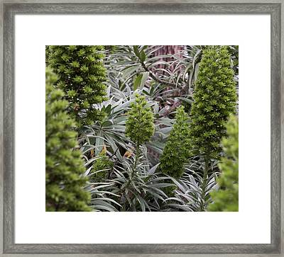Into The Grove Framed Print