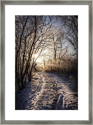 Framed Print featuring the photograph Into The Light by Annette Berglund