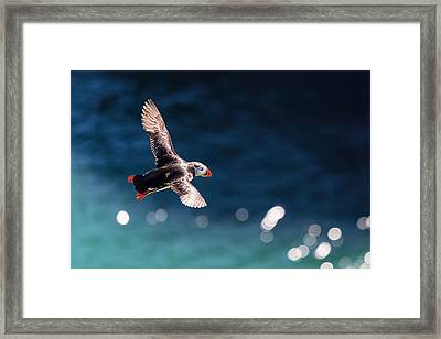 Into The Light Framed Print by Ingi T. Bjornsson