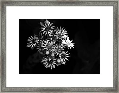 Into The Light Framed Print by Silke Brubaker