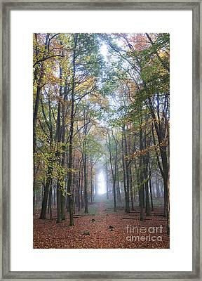 Into The Light Framed Print by Tim Gainey
