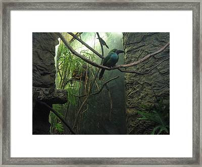 Into The Looking Glass Framed Print by Dawn Davis