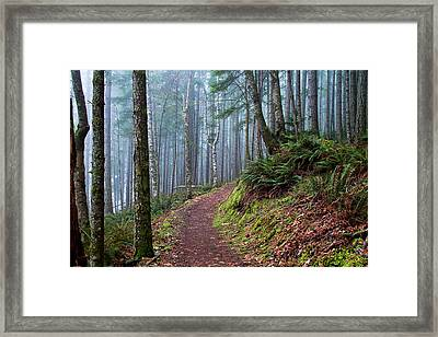 Into The Misty Forest Framed Print