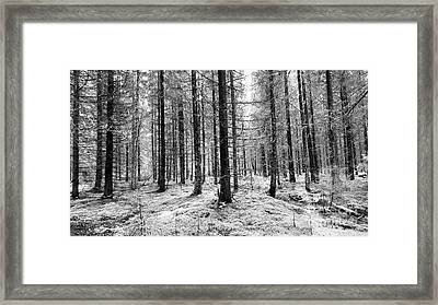 Into The Monochrome Woods Framed Print