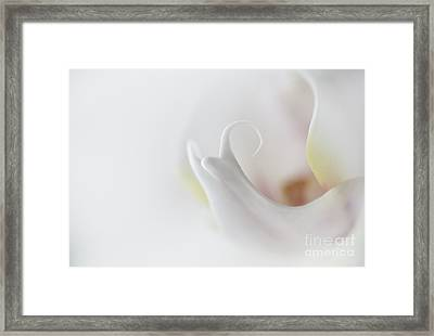 Into The Orchid Framed Print