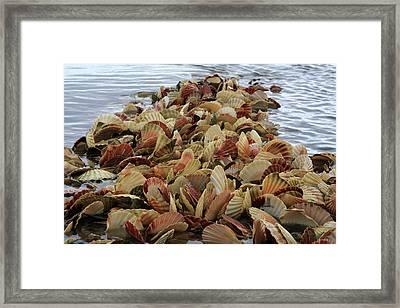 Into The Sea Framed Print by Aidan Moran