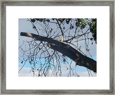 Tree Leaves Into The Sky Framed Print