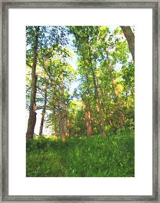 Into The Summer Forest Framed Print