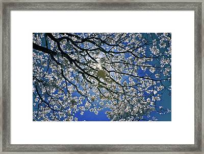 Framed Print featuring the photograph Into The Sun by Linda Unger
