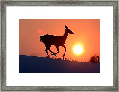 Into The Sunset Framed Print by Scott Mahon