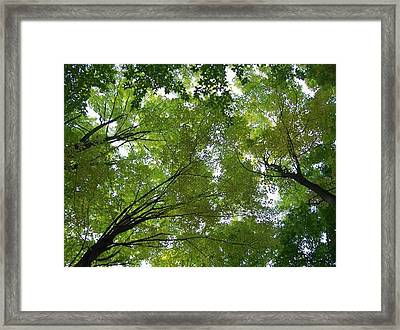 Framed Print featuring the photograph Into The Trees by Michael  TMAD Finney
