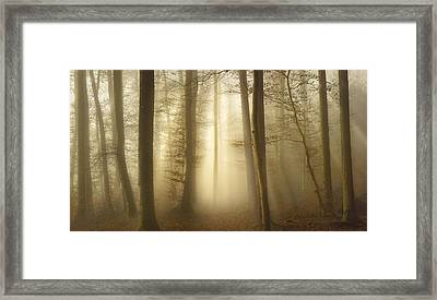 Into The Trees Framed Print by Norbert Maier