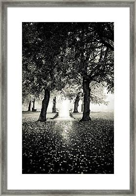 Into The Unknown Framed Print by Maggie Terlecki