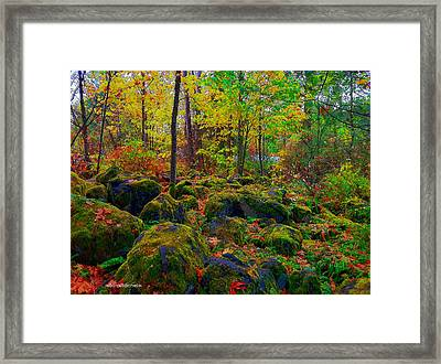 Into The Wild Framed Print by Sarai Rachel