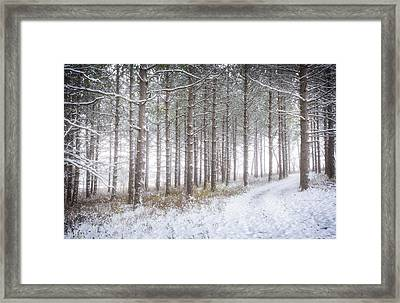 Into The Woods 3 - Winter At Retzer Nature Center  Framed Print by Jennifer Rondinelli Reilly - Fine Art Photography