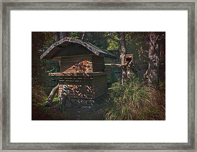 Into The Woods Framed Print by Carol Japp