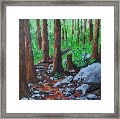 Into The Woods Framed Print by Caroline Liggett