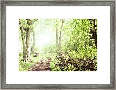 Framed Print featuring the photograph Into The Woods by Joel Witmeyer