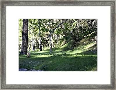 Into The Woods Framed Print by Jon Rossiter
