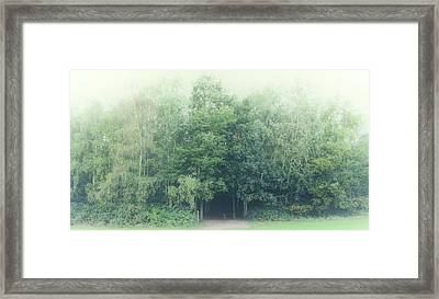 Into The Woods Framed Print by Martin Newman