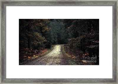 Into The Woods Framed Print by Svetlana Sewell