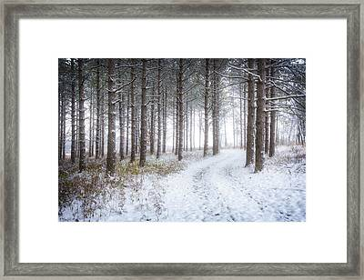 Into The Woods - Winter At Retzer Nature Center  Framed Print by Jennifer Rondinelli Reilly - Fine Art Photography