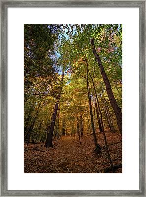 Into Vaughan Woods Framed Print by Rick Berk