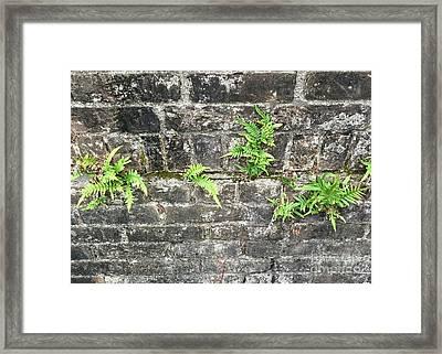Intrepid Ferns Framed Print by Kim Nelson