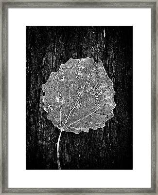 Intricate  Framed Print by Karen Stahlros