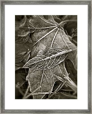 Intricately Frosted Framed Print by Gwyn Newcombe