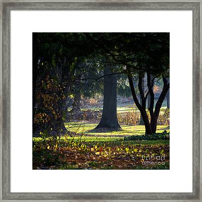 Intrigued By The Light Framed Print
