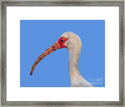 Framed Print featuring the photograph Intriguing Ibis .png by Al Powell Photography USA