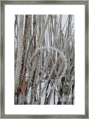 Intriguing Winter Frost Framed Print by Carol Groenen