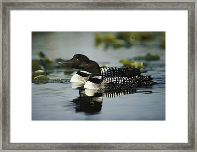 Introduction  Since 1983 Inexplicably Framed Print by Michael S. Quinton