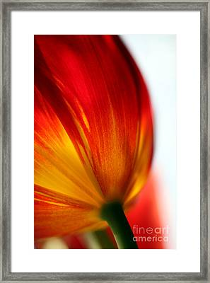 Introverted Framed Print by Amanda Barcon