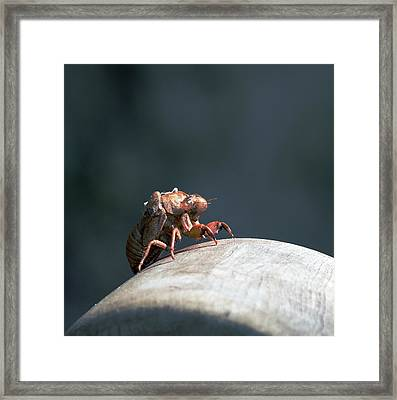 Invader From.... Framed Print