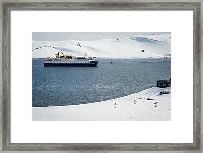 Invasion Of Half Moon Island - Antarctica Photograph Framed Print